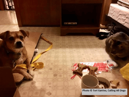 Wrapping gifts for other dogs. Notice there are no sheets on the bed.
