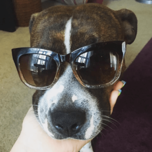 This picture of Chester looking sporting in his sunglasses during a Weekend Getaway caught his forever family's eye