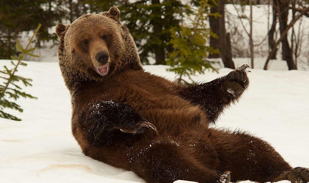 Boo! Training a Bear 2019