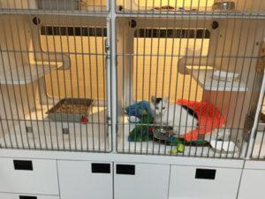Cat housing in shelter
