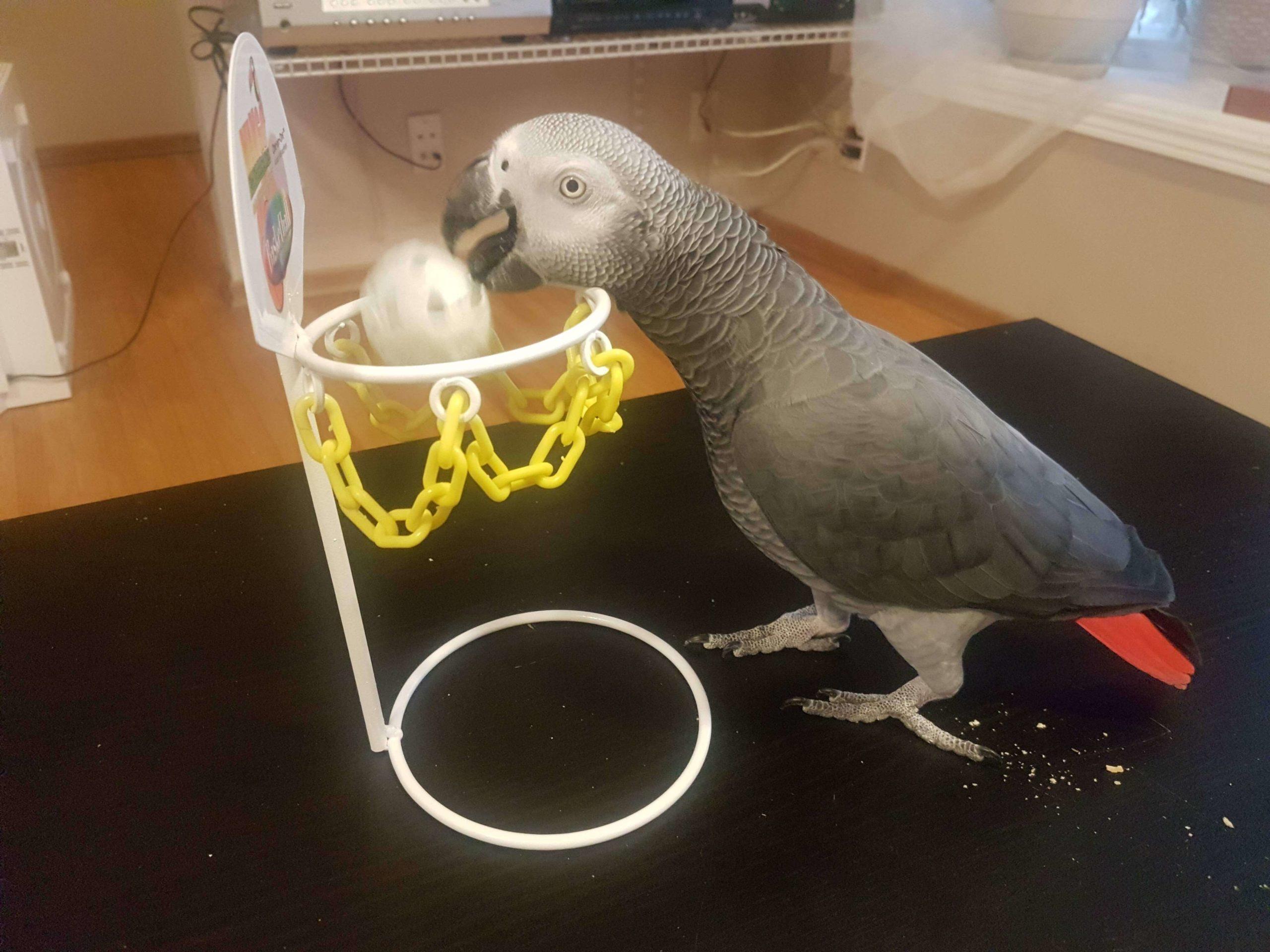 Bird School is a slam dunk!
