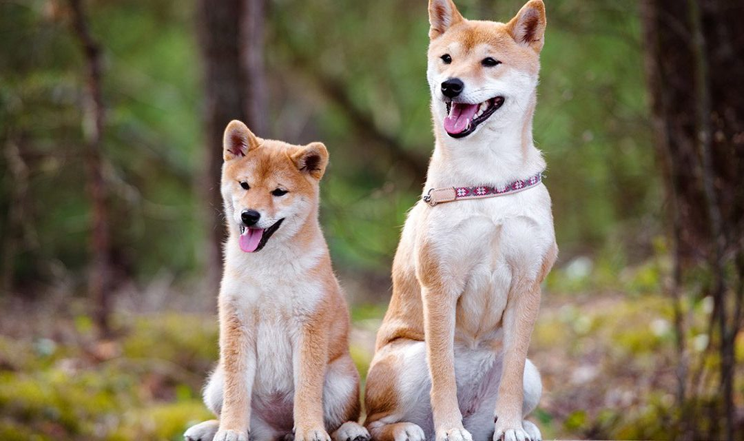 The Importance of Collaboration and Mentoring in Dog Training