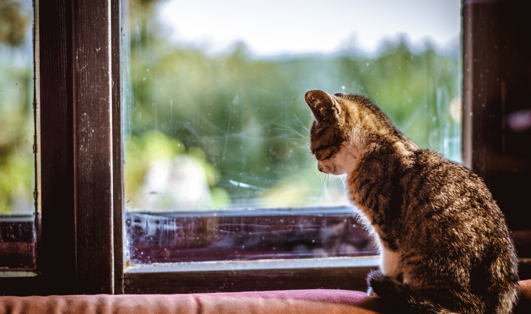 Separation-Related Problems in Cats