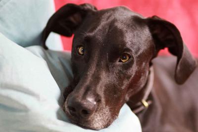 Three Leash Reactive Dog Cases