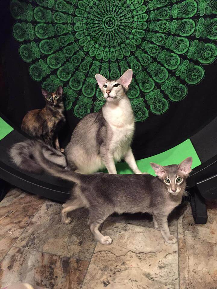 All my cats posing with their wheel.