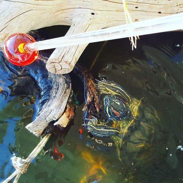 Turtle target training