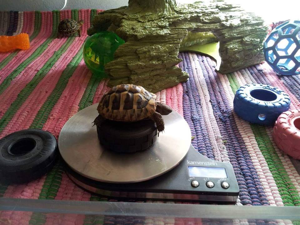 turtle on scale