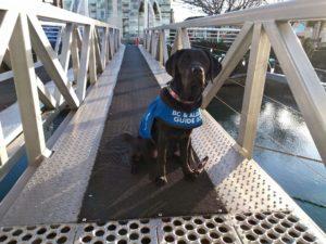 Black service dog on a bridge