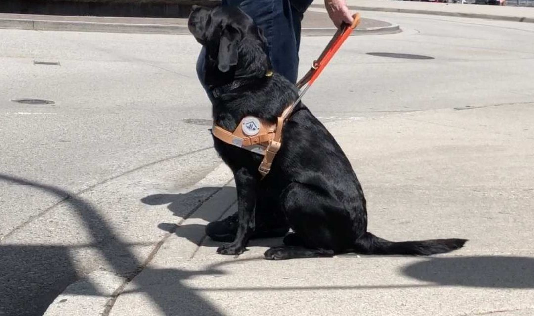 Environmental Cues in Service Dogs