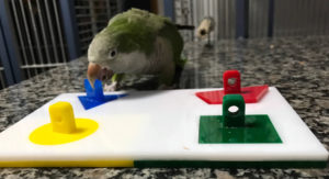 Ozzie completing a puzzle
