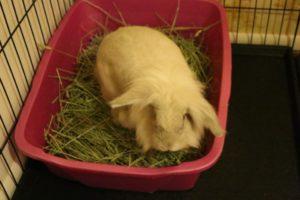rabbit litterbox setup