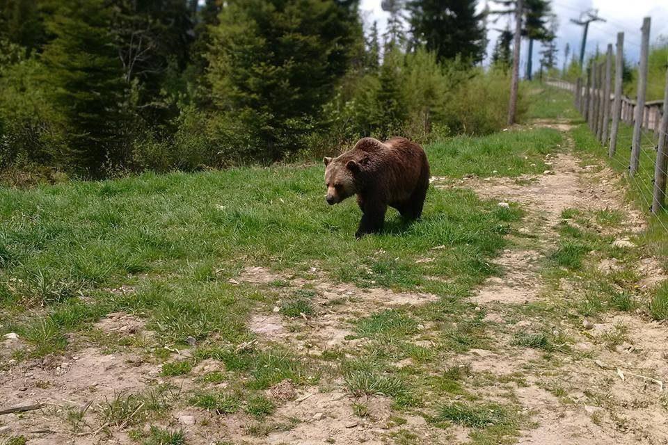 Boo! Training a Bear
