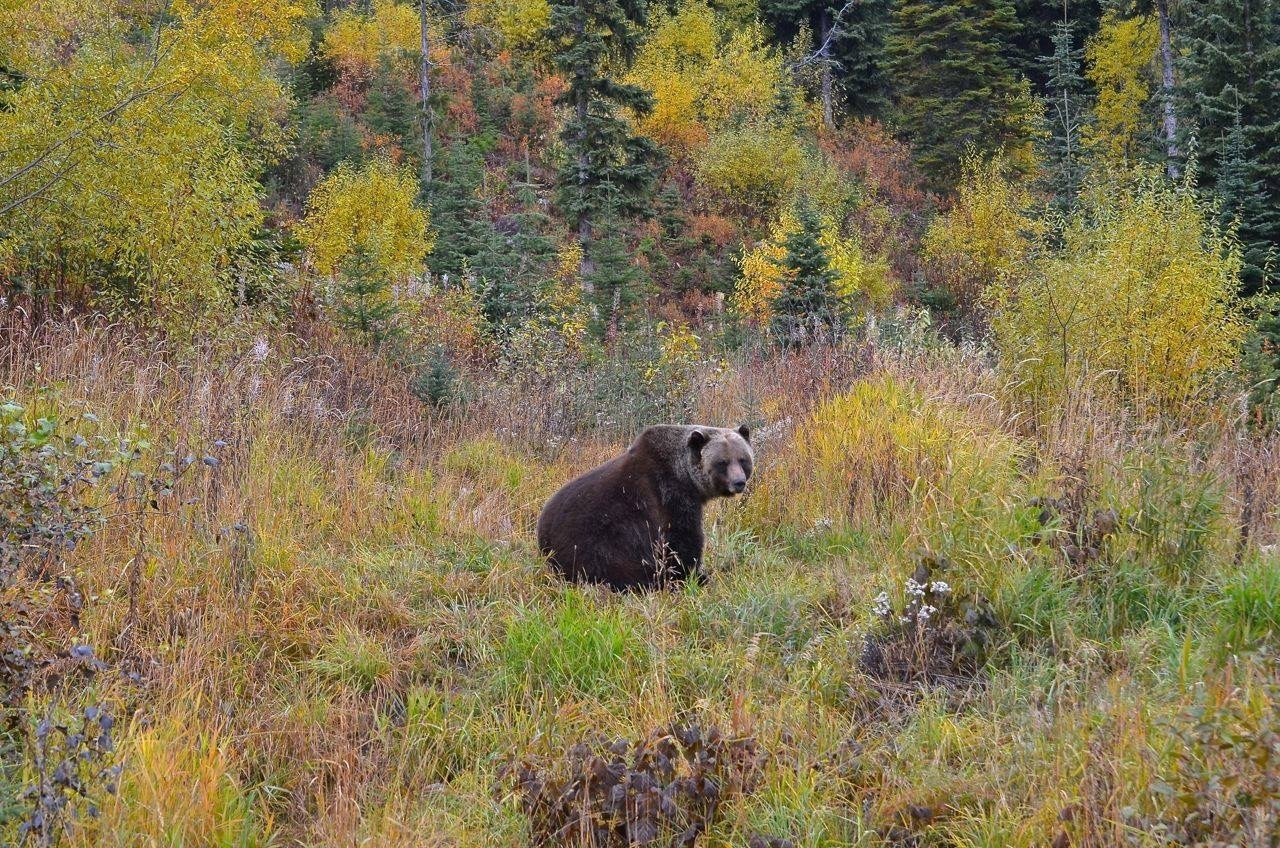 Boo the Bear's habitat