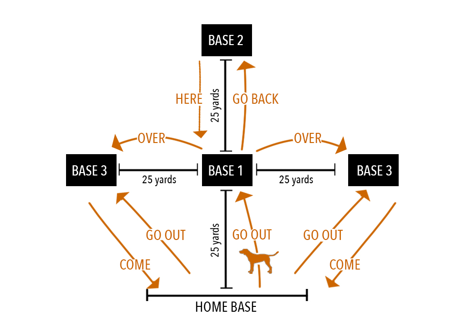Canine Directability Diagram
