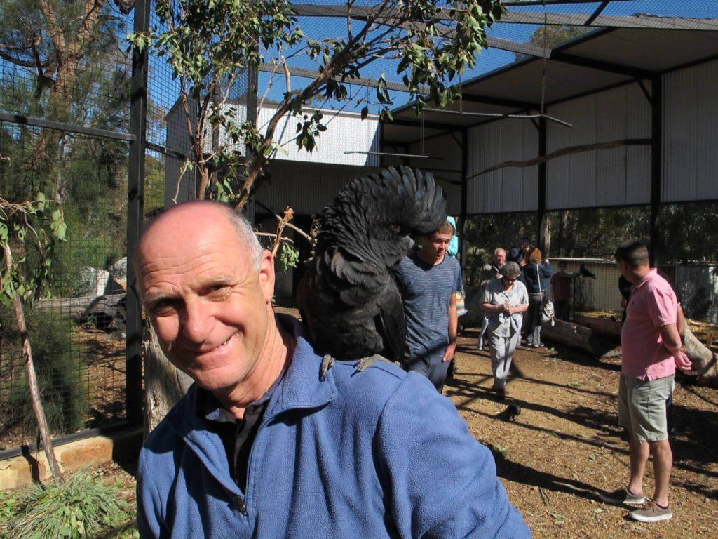 Ambassador cockatoos in the Interactive Aviary at Kaarakin. Credit Dorothea Bassett