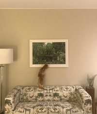 Sal retrieving a Greenie from a picture frame