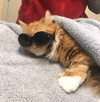 Sal during laser therapy