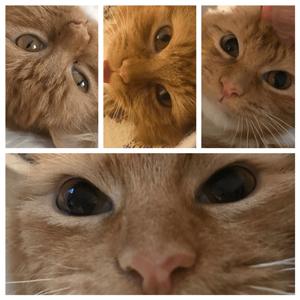 Sal's various eye dilation levels