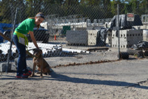 Working with dogs around the construction site