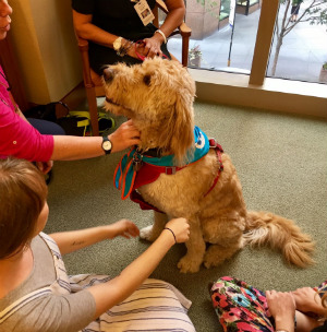 Winston the Labradoodle visits young people at a rehabilitation facility