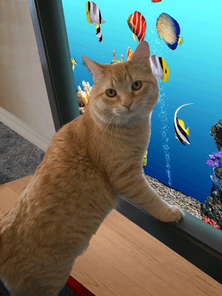 A cat watching a fish video