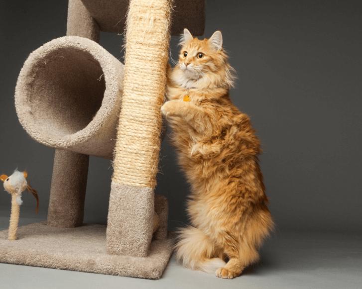 An orange cat by a cat tree