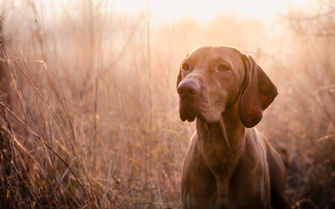 The Politics of Identity in Hunting Dogs