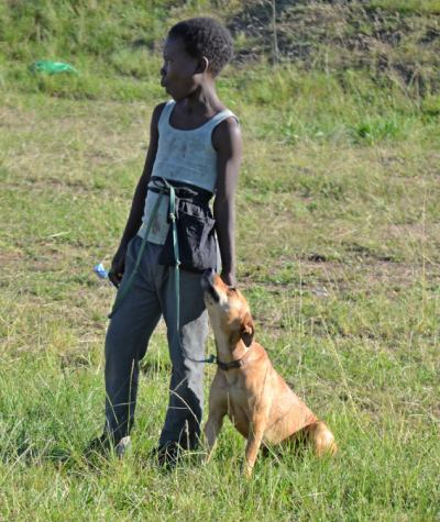 A young boy with a dog in a training classs