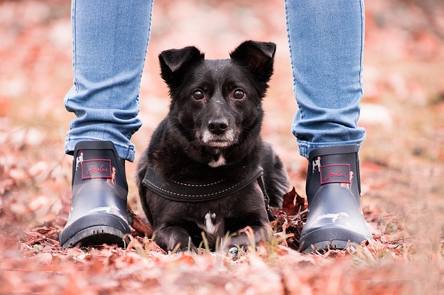 In a Human World: Consent, Autonomy, and the Emotional Wellness of Companion Dogs