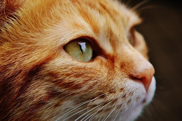 Cat Training Corner: Preparing for Bloodwork