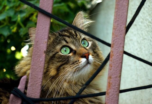 Disaster Preparedness Skills for Your Feline Behavior Clients