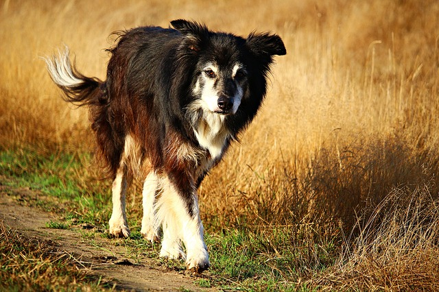 What We Need to Learn About Missing Dogs