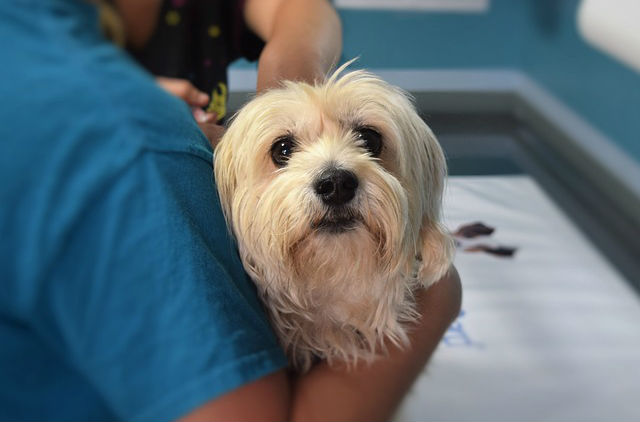 Case Studies: Creating the Cooperative Canine for Veterinary Care