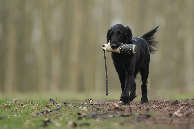 A Personal History of Dog Training