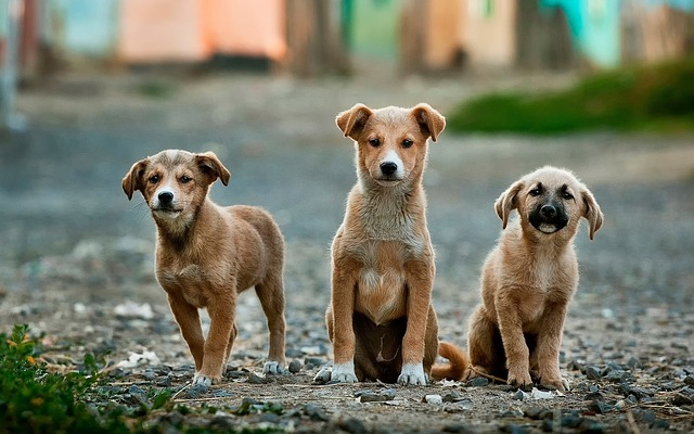 What Can Street Dogs Teach Us About Socialization?