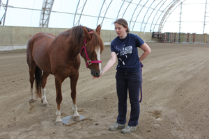 Foster - working with horse at liberty