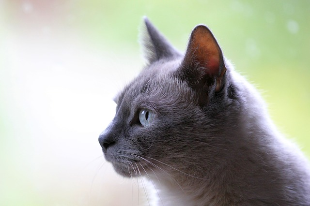 How To Talk About…Adding More Litter Boxes?