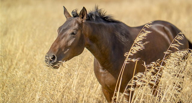 Environmental Enrichment for the Horse: The Need to Forage