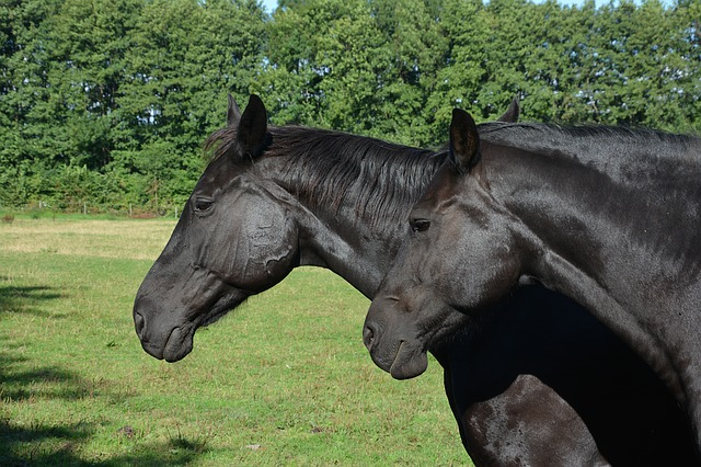 Do Horse Walkers Cause Stress, and Can we Reduce it by Exercising Horses Together?