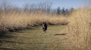 Off-leash canine recall