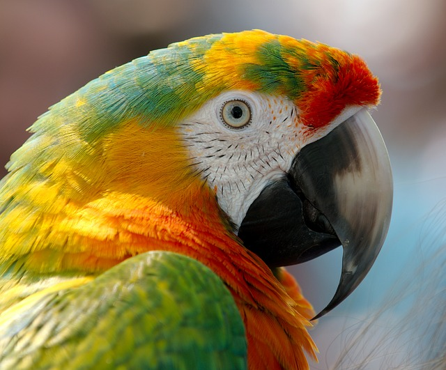 Is a Busy Parrot Really a Happy Parrot?