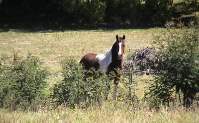 Magnum the horse in his pasture