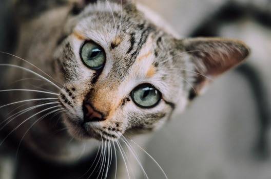 Insights from Cat Agility