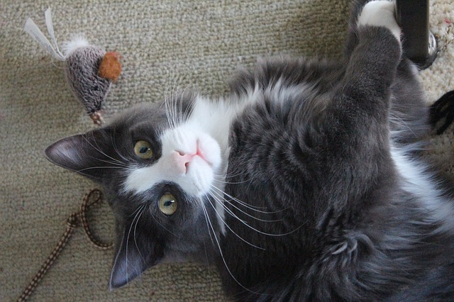 Special Challenges of Senior Cats in Shelters
