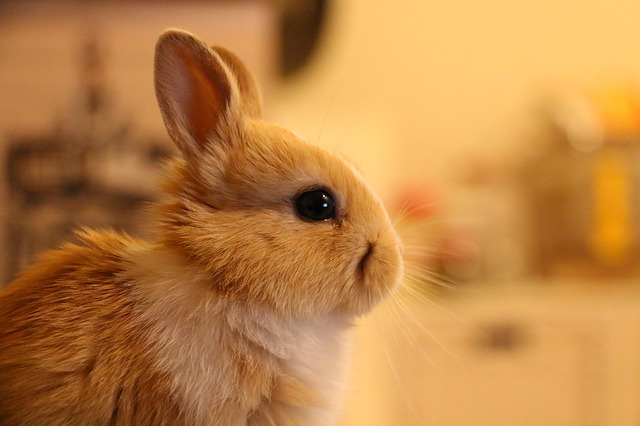 Setting Everybunny Up for Success: A 3-Part Series on Helping Rabbits Succeed in Their Adoptive Home