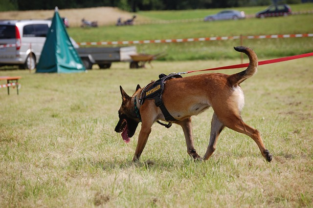 Directional Control: Not Just for Working Dogs