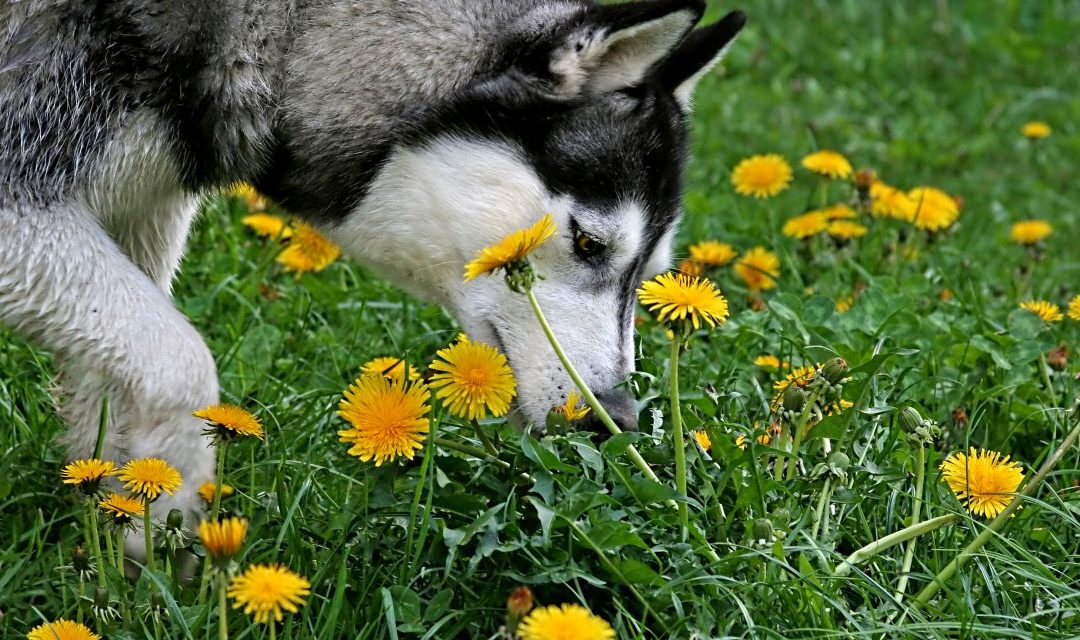 The Effects of Environmental Enrichment on Dog Behaviour