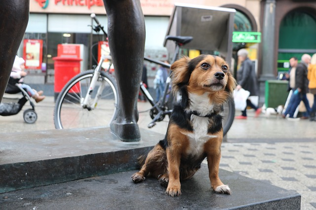 Helping Dogs in High-Rise Living Situations: Beyond Skills Training