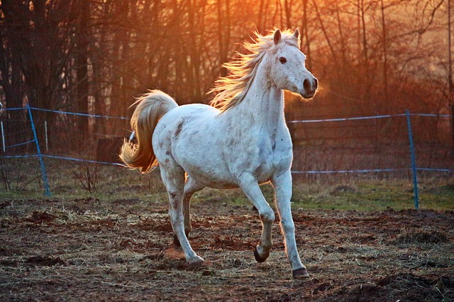 Developing an Agitation Rating Scale for Horses