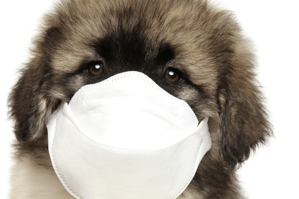 Puppy Pandemic – Facing Socialization Challenges Amidst COVID-19